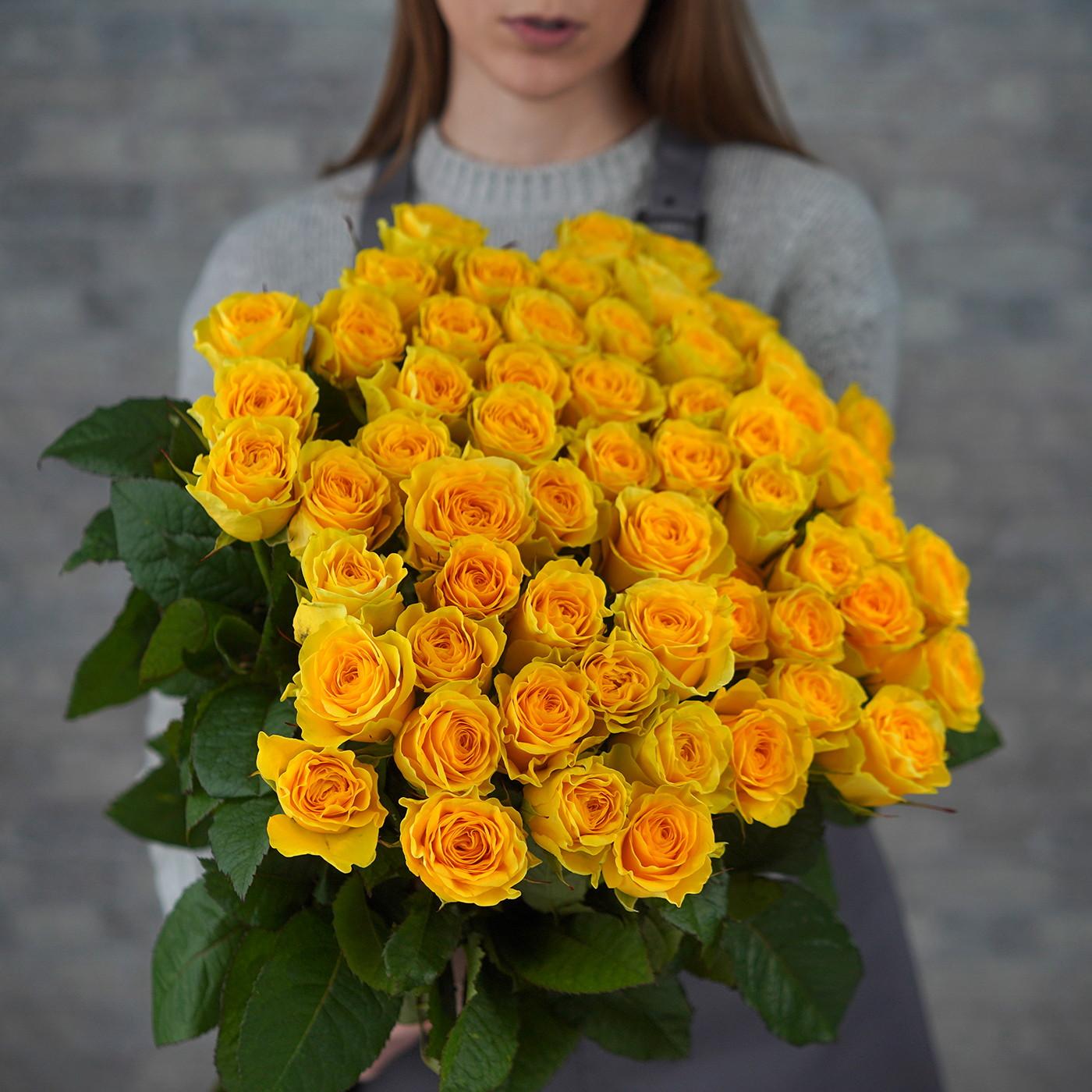 Роза «Илиос», Россия
