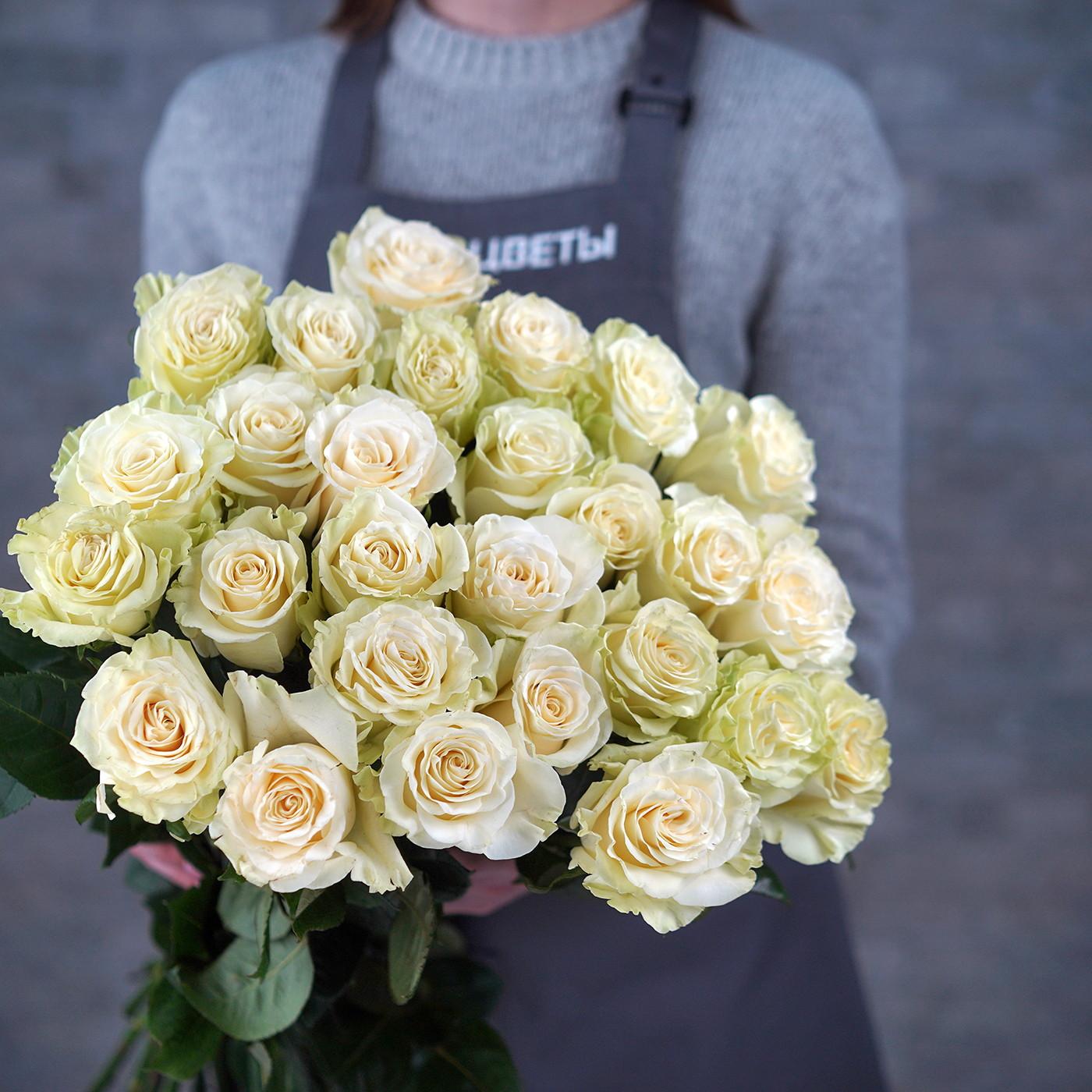 Роза «Мондиаль», Эквадор
