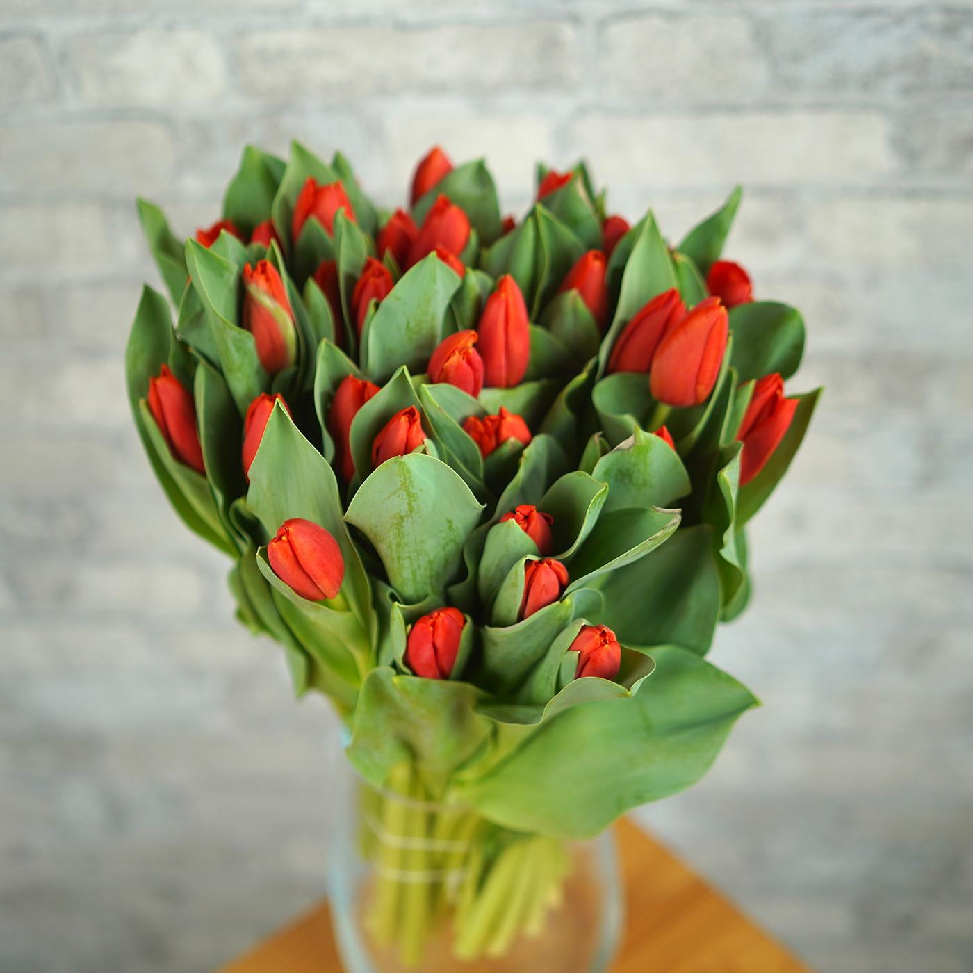 Тюльпан красный «Red Stone», Голландия