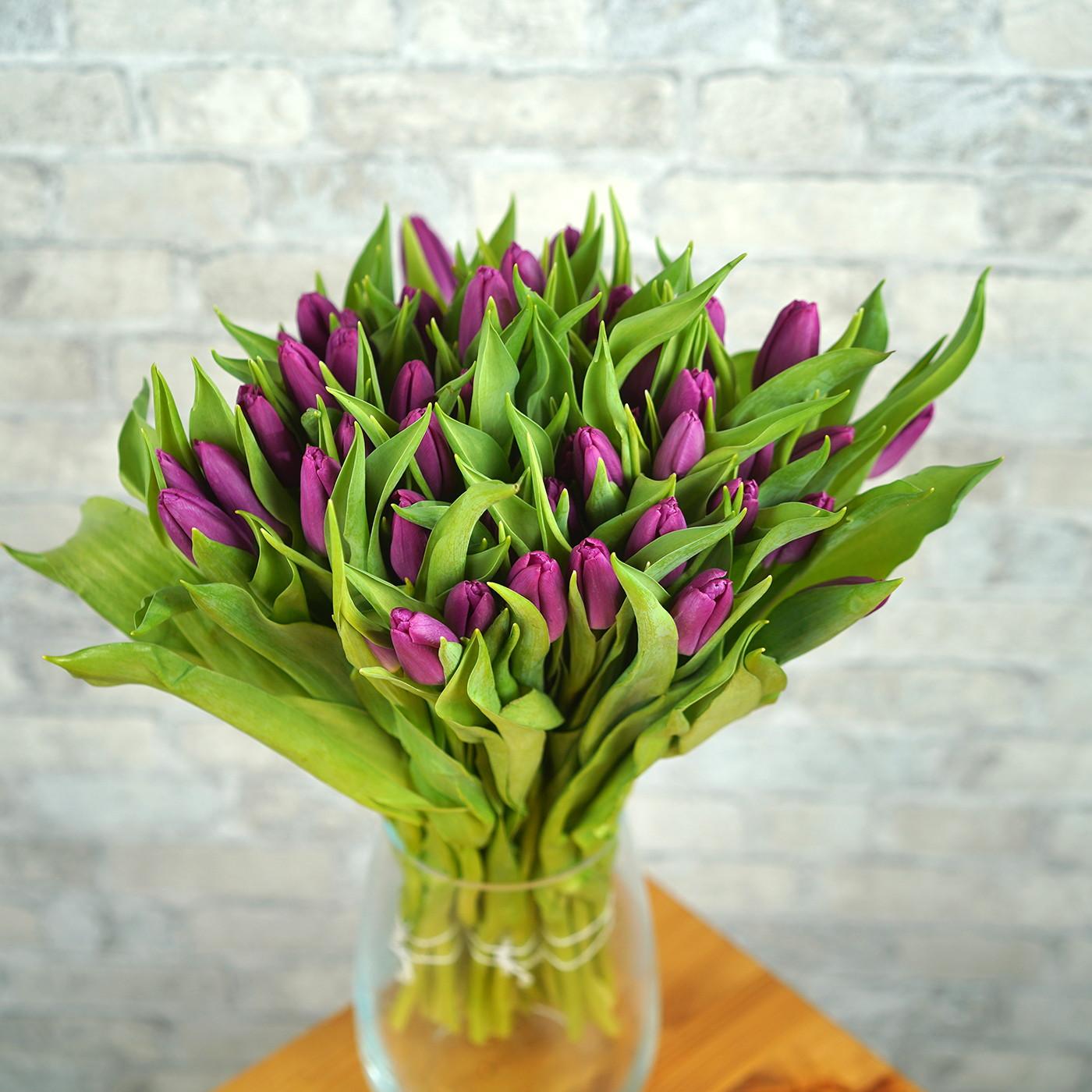 Тюльпан лиловый «Curry», Голландия