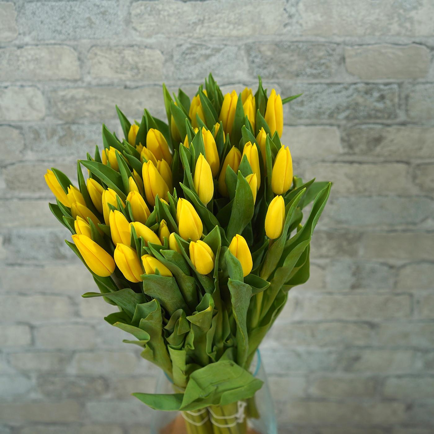 Тюльпан золотой «Strong Gold», Голландия