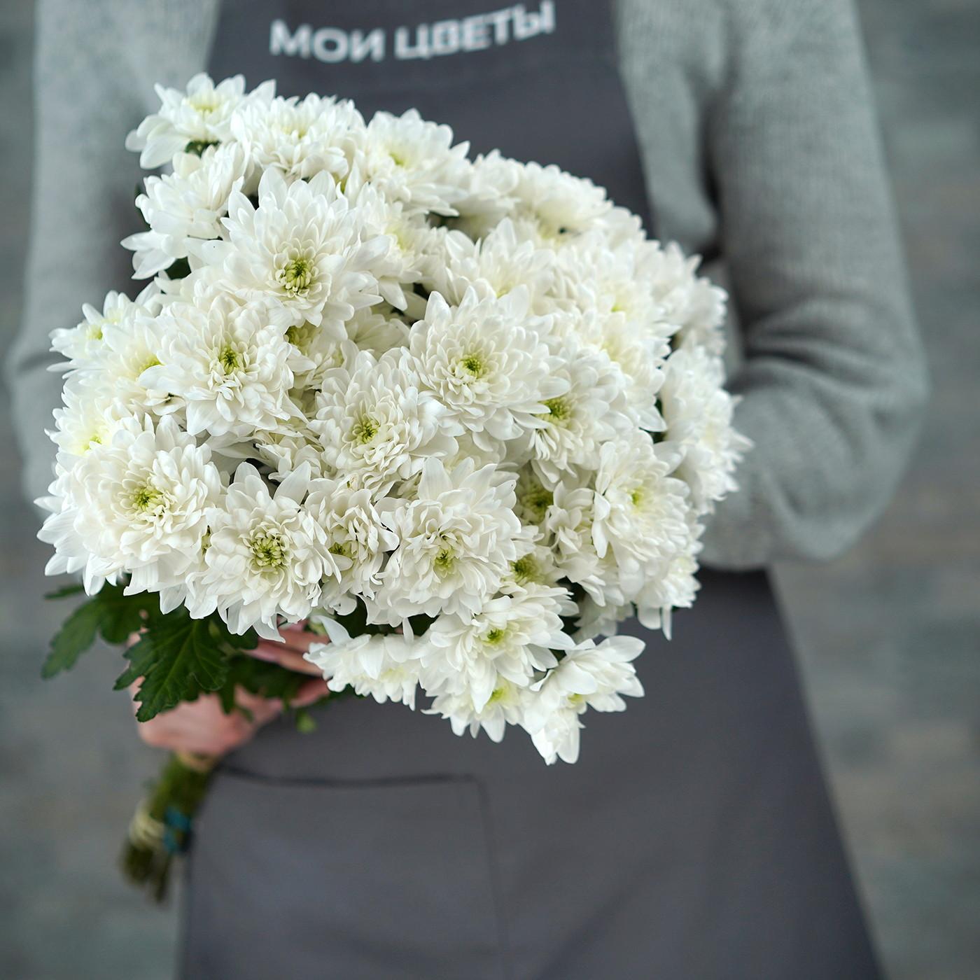 Хризантема «Балтика» белая, Голландия