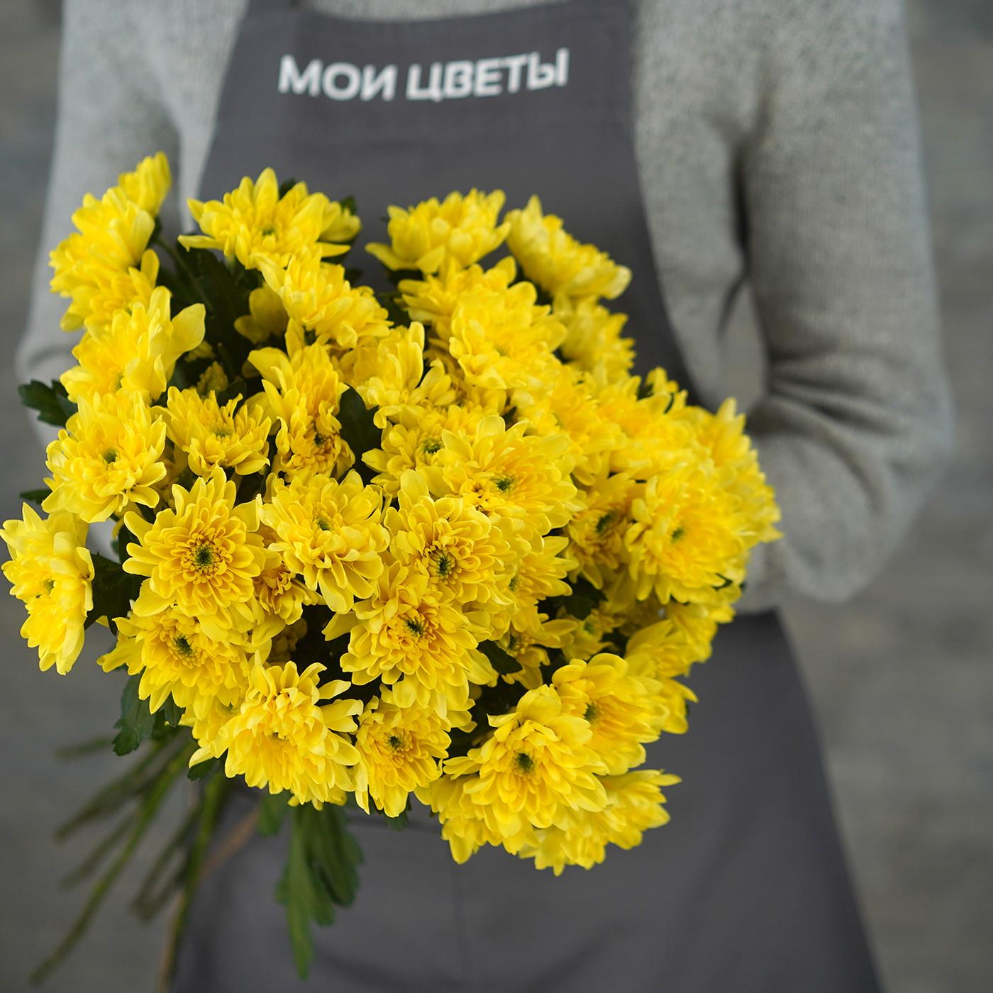 Хризантема «Балтика» желтая, Голландия