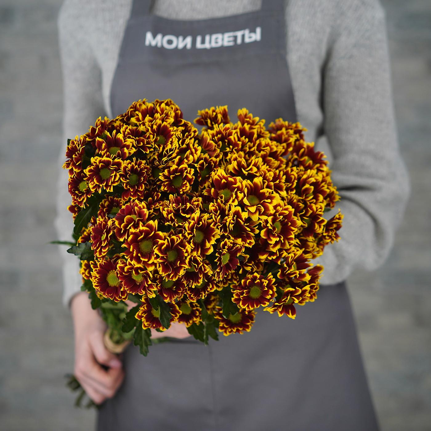 Хризантема кустовая «Раиса», Голландия