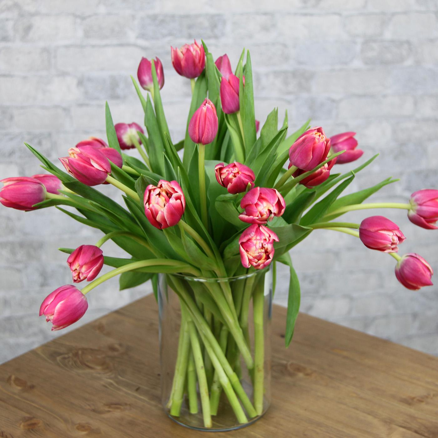 Тюльпан розовый «Колумбус Роуз», Голландия