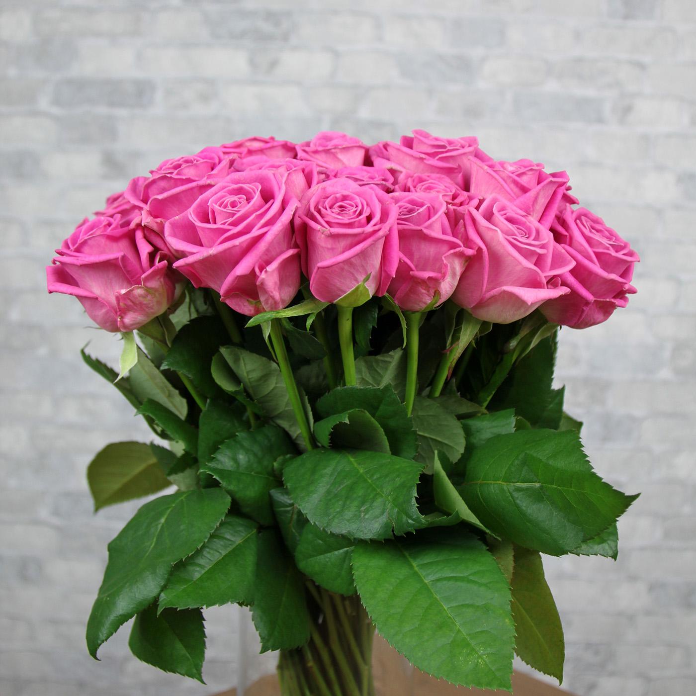 Роза «Аква», Россия