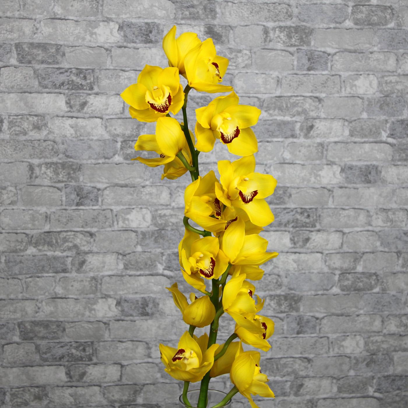 Орхидея Цимбидиум «Желтая»