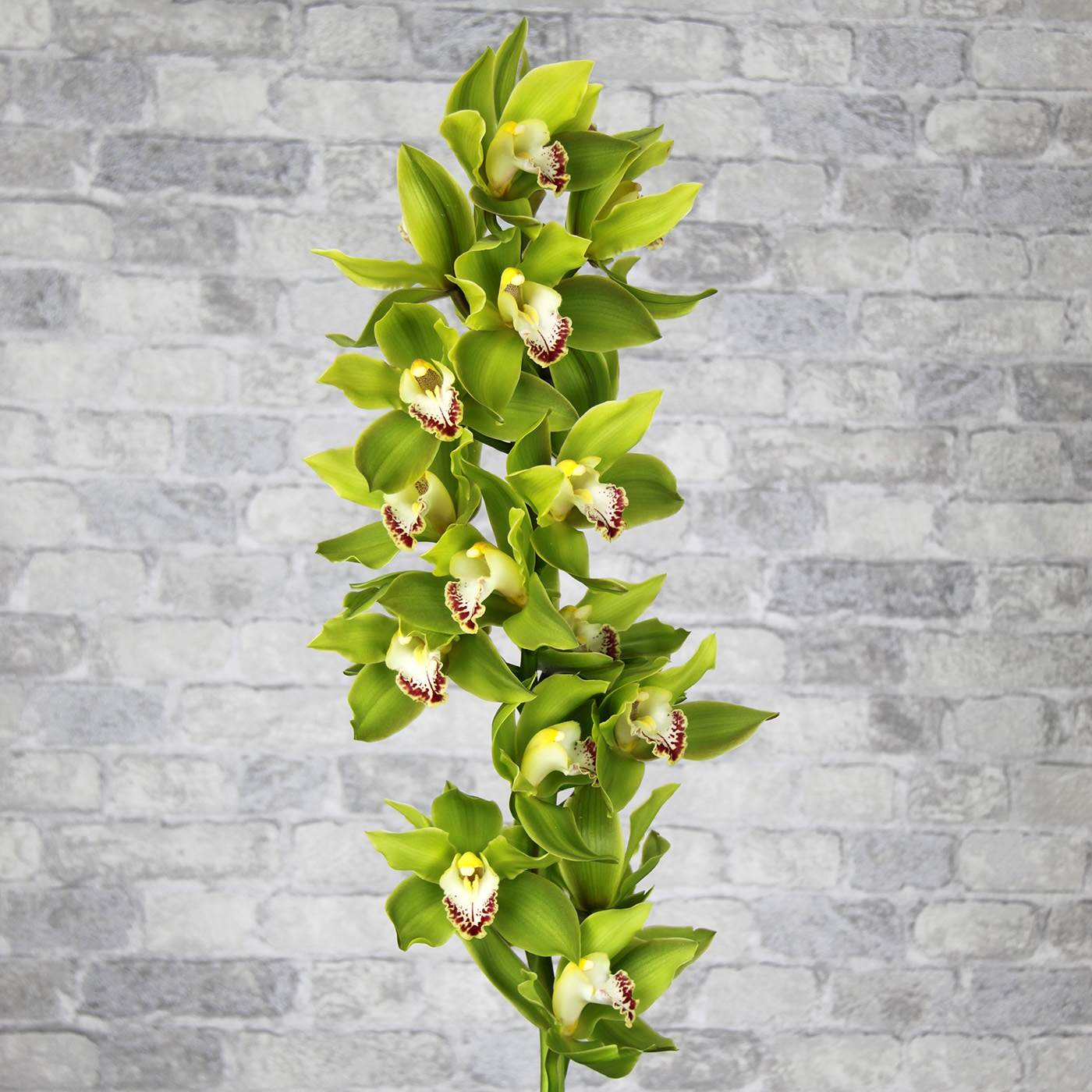 Орхидея Цимбидиум «Лайм»