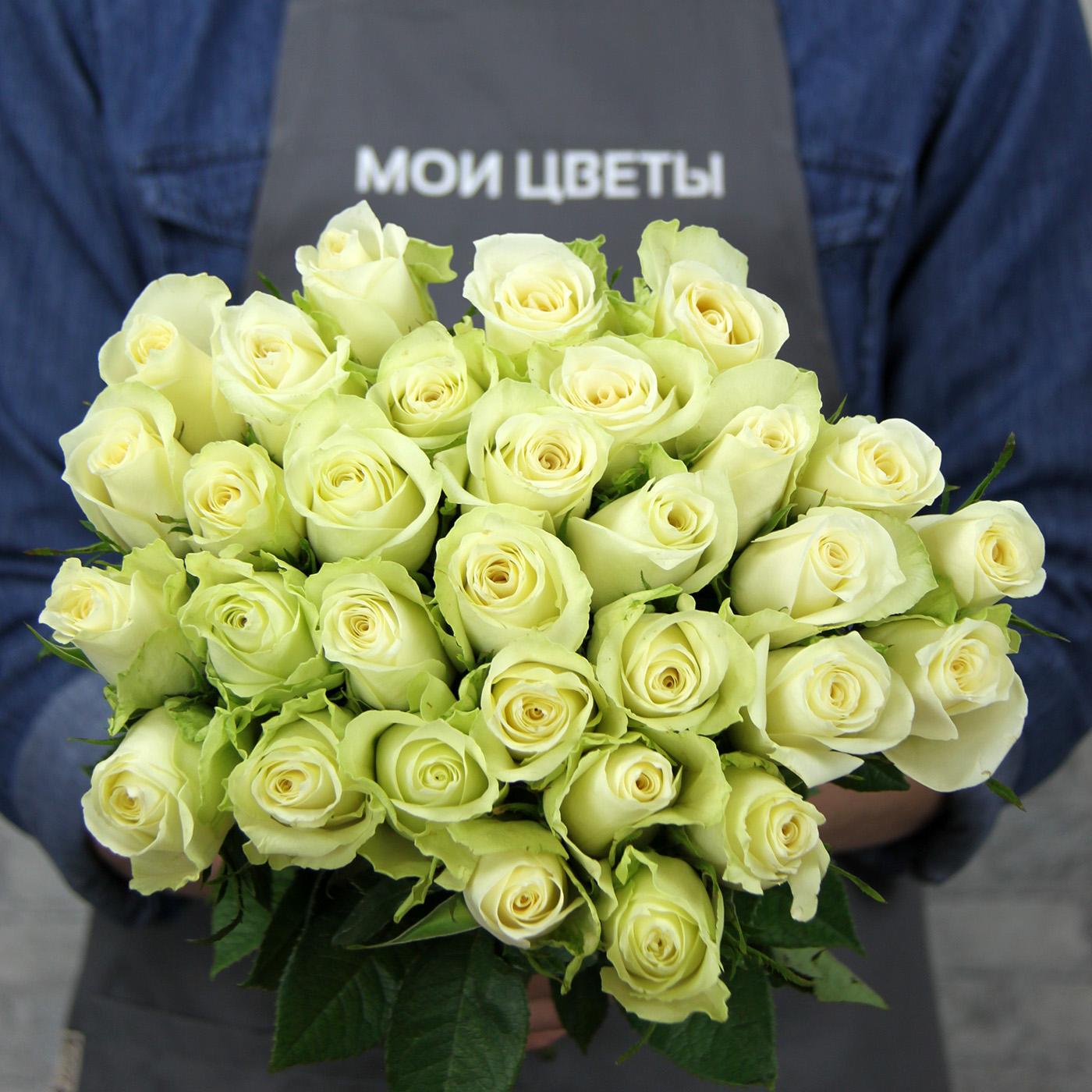 Роза «Афена», Кения