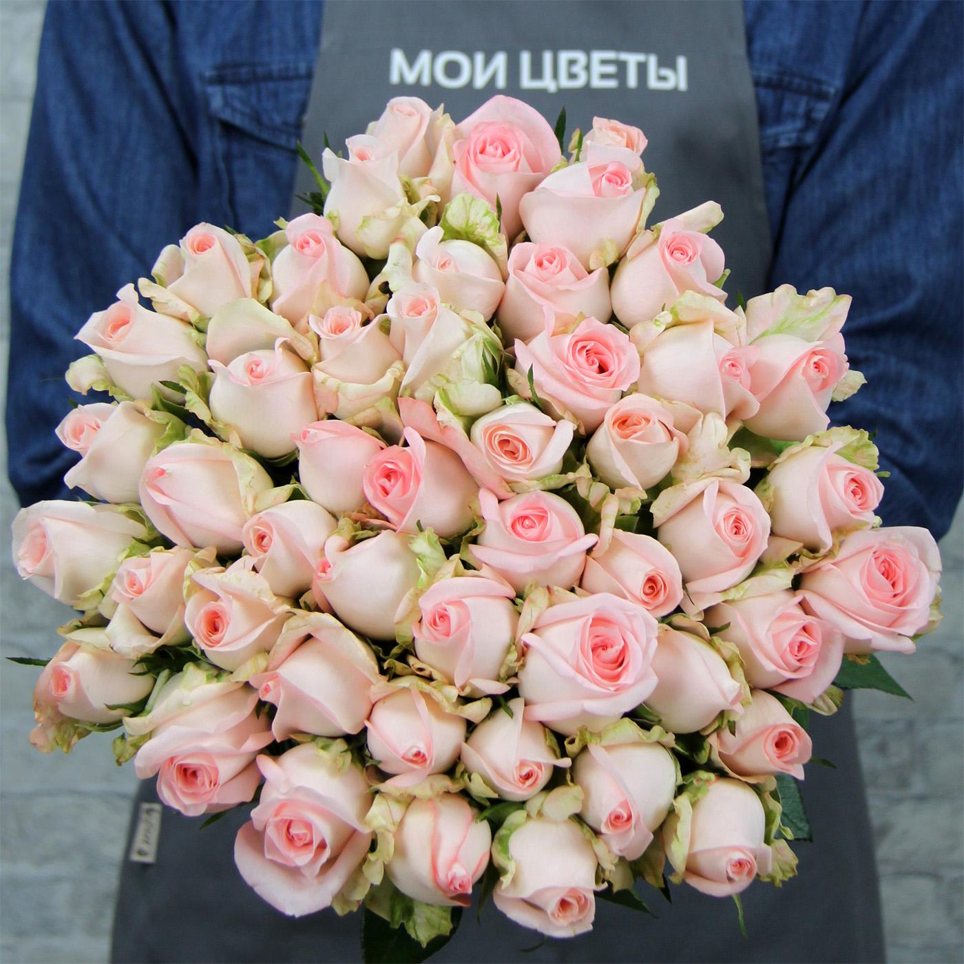 Роза «Фламинго», Кения