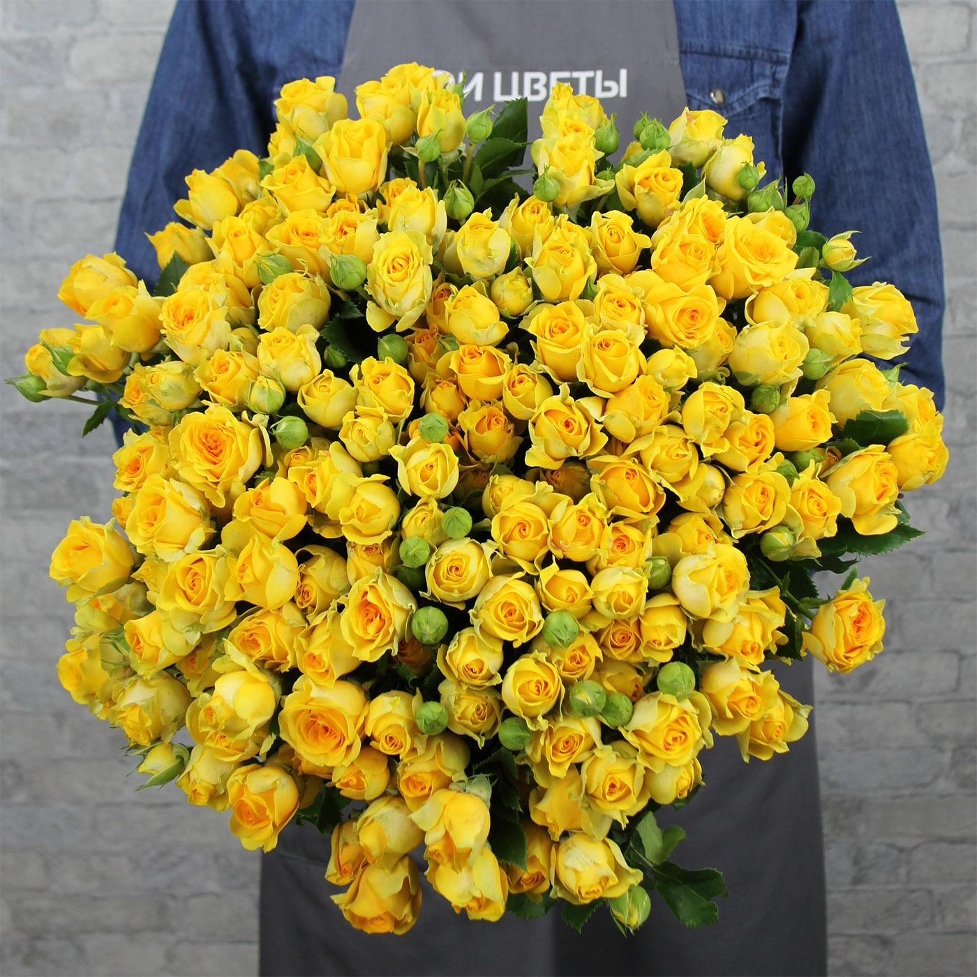 Роза кустовая «Мариса», Кения