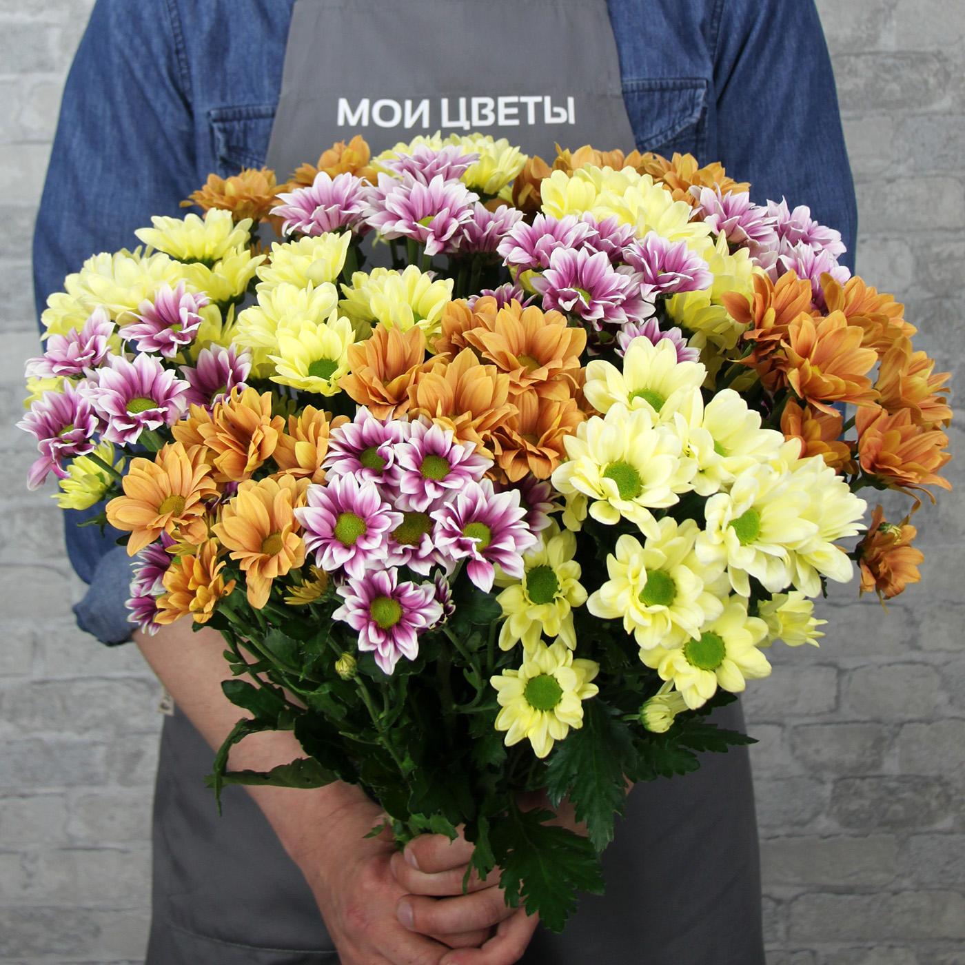 Хризантема кустовая в ассортименте, Голландия