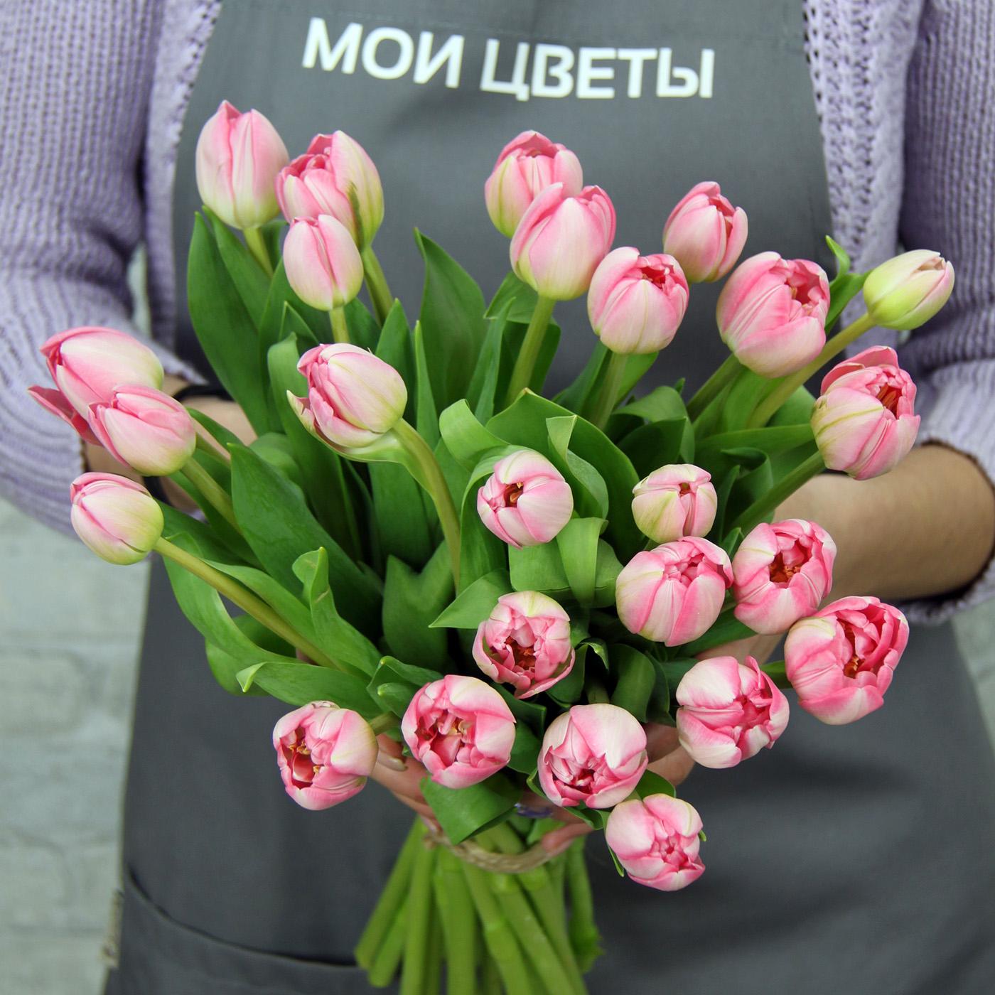 Тюльпан розовый «Ап Пинк», Голландия