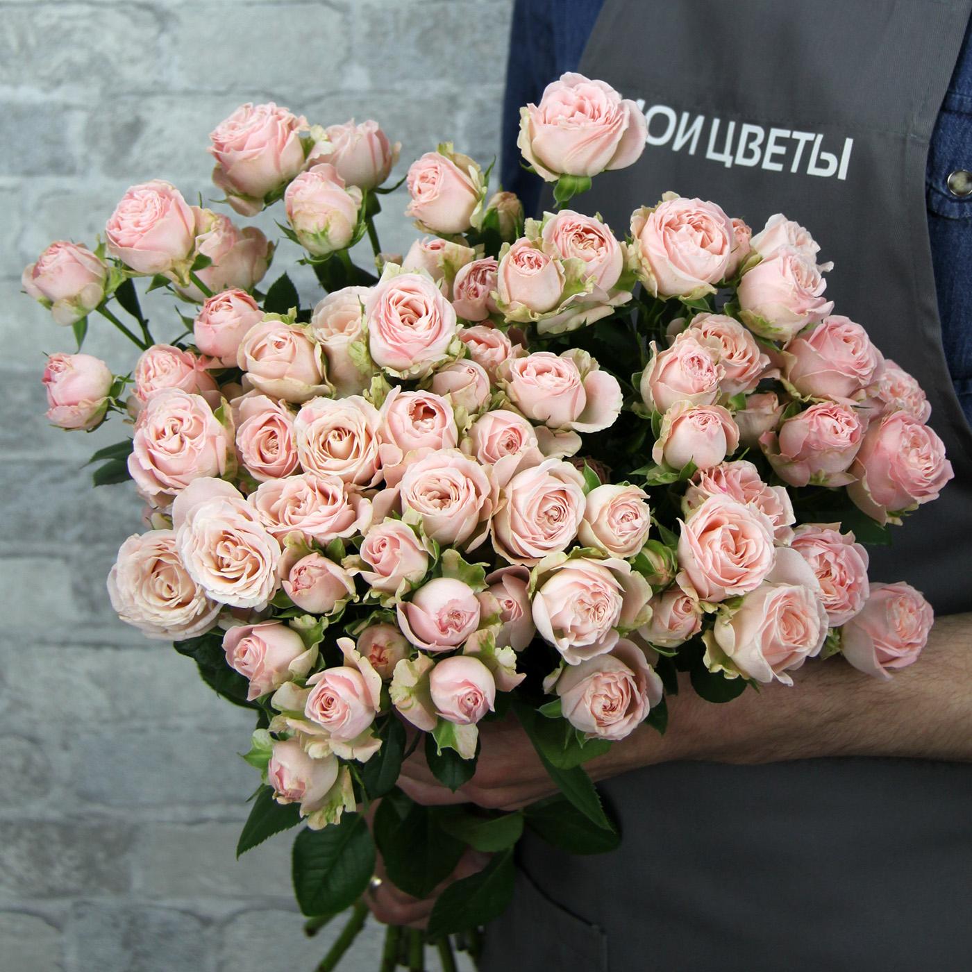 Роза кустовая кремово-розовая, Кения