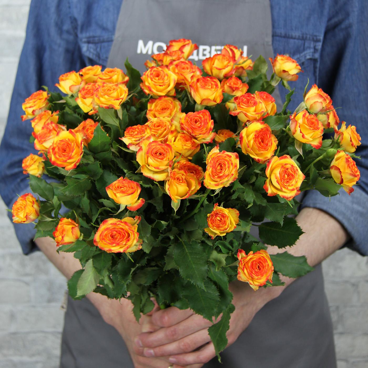 Роза кустовая желто-красная, Кения